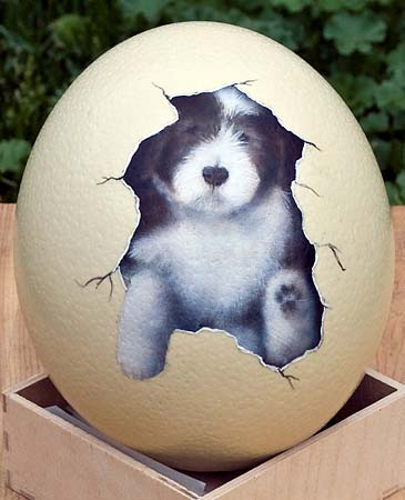 Ostrich Egg Designs Photo Album - The Miracle of Easter